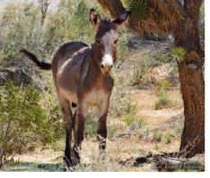 donkey-3