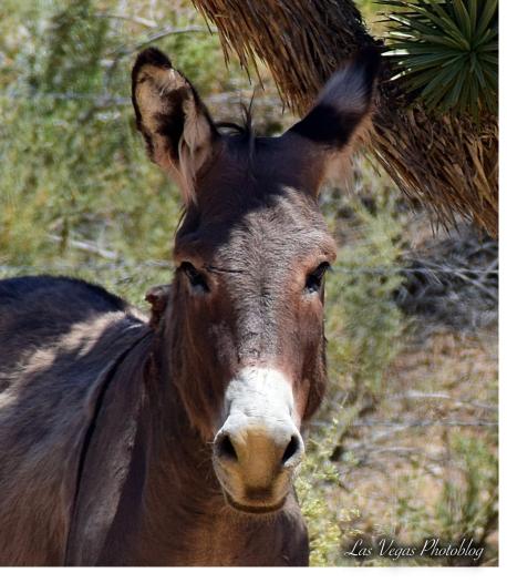 donkey-4