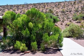 green-bush