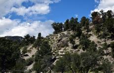 spring-mountain-range