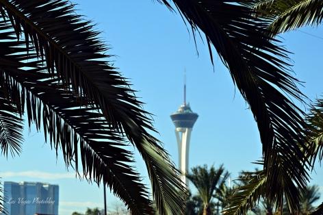 stratosphere-palms