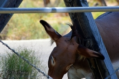 wild-donkey-2