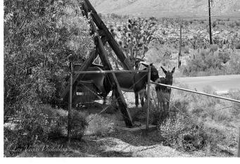 wild-donkey-6