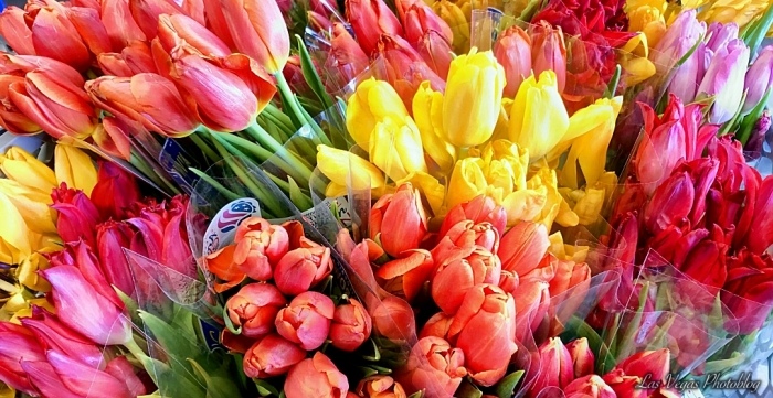 colourful-flowers