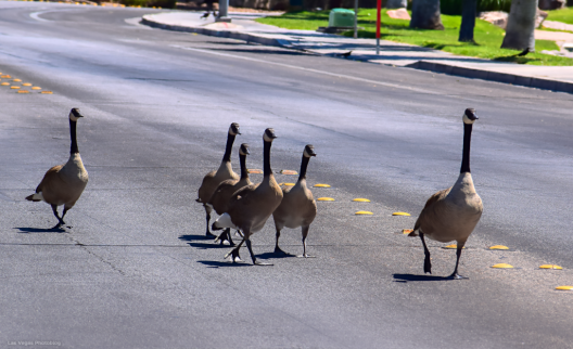 A Family Outing!