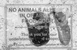 no-animalsb