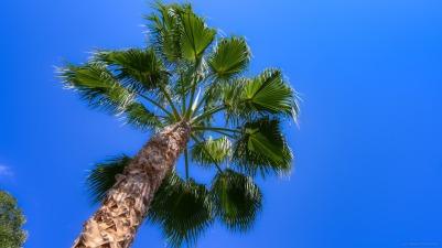 A very sunny palm tree