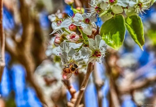 Animated Bee