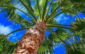 My Palm Tree
