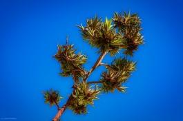 Beautiful desert foliage